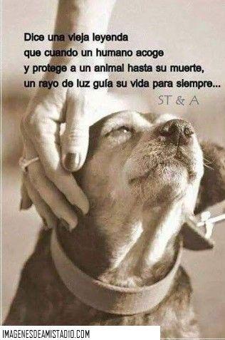 Con Animales Y Frases Tiernas Perros Frases Perros Animales Frases