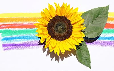 Ecommerce Lately August 2019 With Images Yellow Flower Photos Yellow Sunflower Flower Photos
