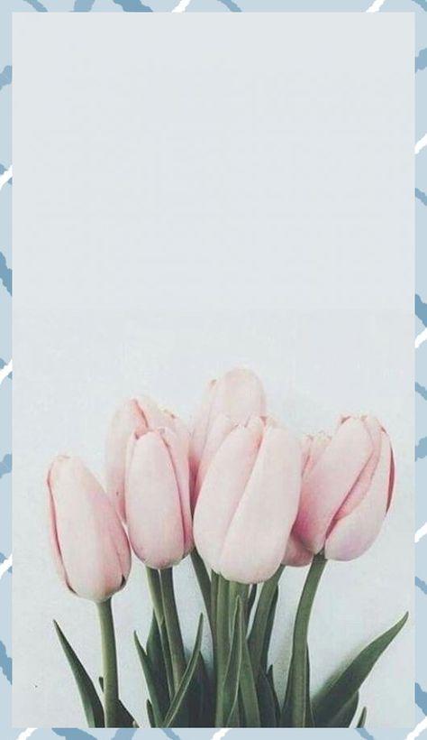 Tulips #bbloggers #fbloggers #fblchat #lbloggers