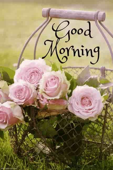 Best Good Morning Hd Images Wishes Pictures And Greetings Good Morning Flowers Good Morning Images Good Morning Flowers Pictures