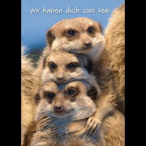 Pin Von Jean Marie Auf Meerkat Katzen Fakten Erdmannchen