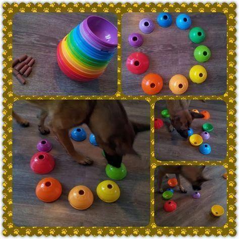 Familiar Dogs Paw Dogsindia Accessoriesdogdiycarseats Diy Dog