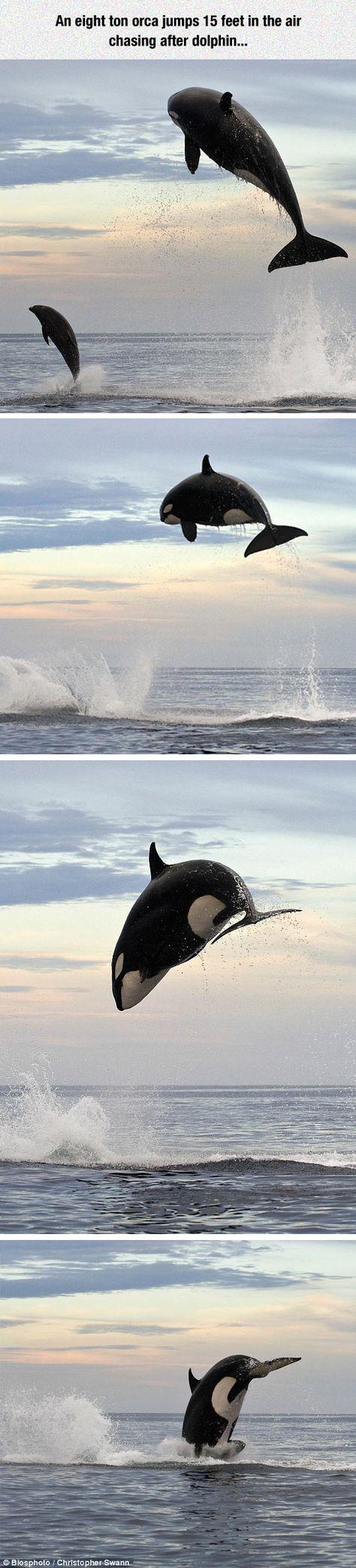 le chasseur de dauphins