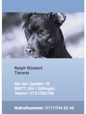 Pin Von Thomas Vogt Auf Hund Tierarzt Tiere Hunde