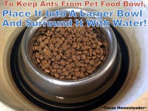 Homestead Hack Poison Free Ways To Eliminate Ants In A Pet Food