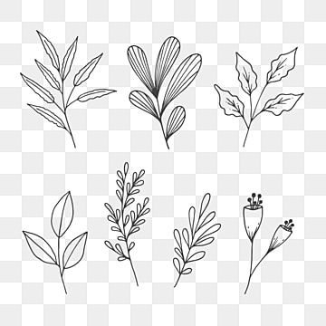 Collection Of Natural Leaves Line Art Sketch Art Black Blooming Png Transparent Clipart Image And Psd File For Free Download Line Art Watercolor Flower Illustration Flower Clipart