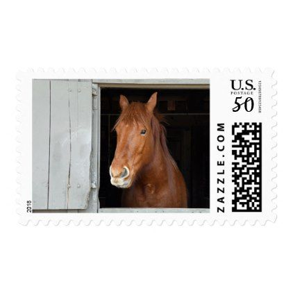 Chestnut Quarter Horse Waiting To Be Let Out Postage Country