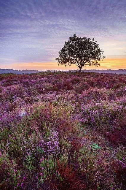 Pin By Sue Hardy On Fantastic Art New Forest England Amazing Nature Landscape Photography