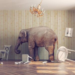 Why Educational Policies Fail The Elephant In The Family Room In