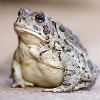 You can't help loving a toad!