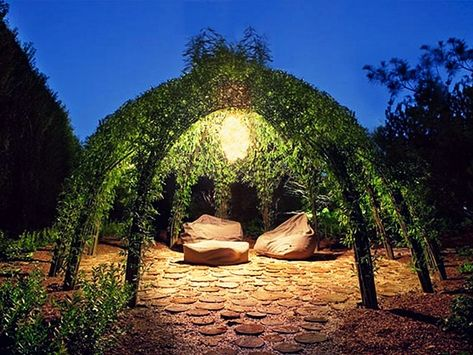 Żywa architektura w ogrodzie przydomowym.