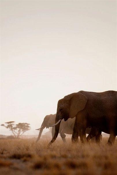 Pin Von Eva Moller Auf Elefanten Afrikanische Tiere Afrika