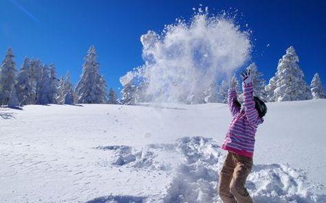 スキー 人気