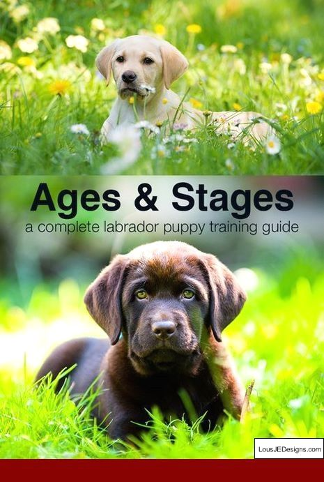 Training A Dog To Be Left Alone And Not Bark And Pics Of How To