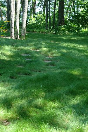 No Mow Low Maintenance Eco Lawn Prairie Nursery Lawn Alternatives Seeding Lawn Backyard Grass Alternative
