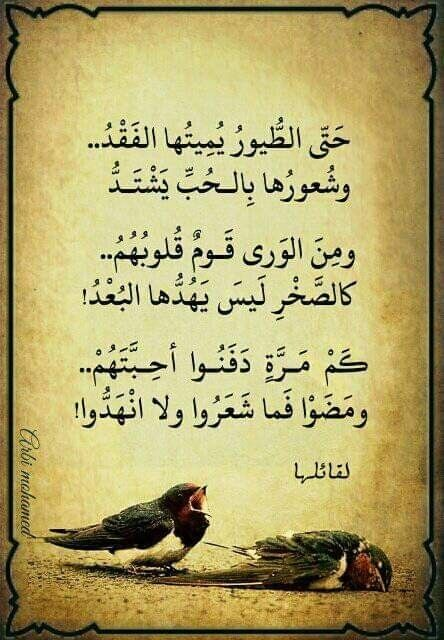 Pin By Mohammed Al Harbi On ديوان الشعر