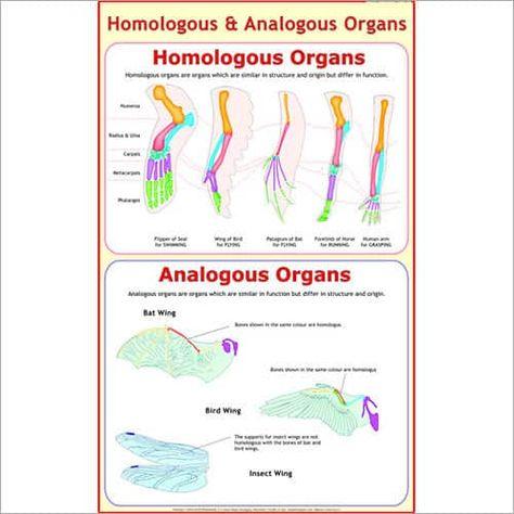 Analogous Homologous Organs Organs