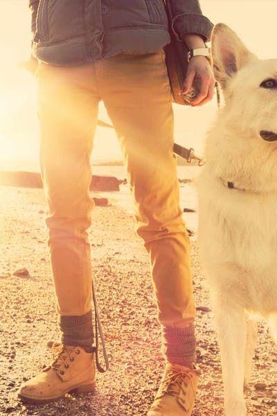 Outlander Inspired Dog Names Wag Dog Names Top Dog Names Outlander