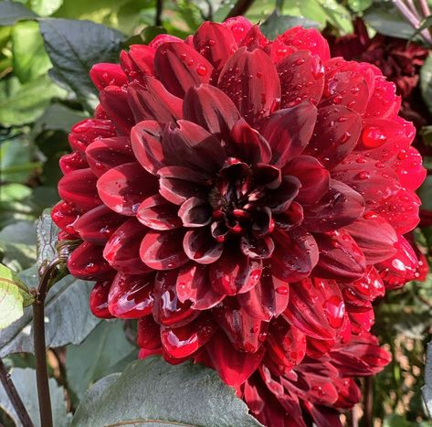 Plant these late summer blooming flowers to help your garden transition from summer to fall with extended blooms and fall color. #gardendesign #gardenideas #gardeninspiration #flowerbedinfrontofhouse