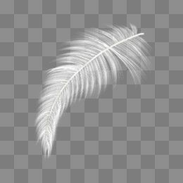 Free Download White Feather Png Image Iccpic Iccpic Com White Feathers Feather White