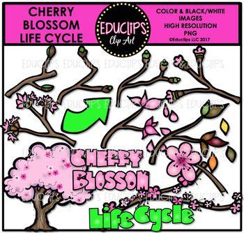 Cherry Blossom Life Cycle Clip Set Educlips Clipart Cherry Blossom Clip Art Art Bundle Life Cycles
