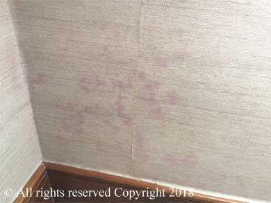 Mould Vinyl Wallpaper Hotels Hotel Mould Hong Kong Molding Vinyl Wallpaper Hotel