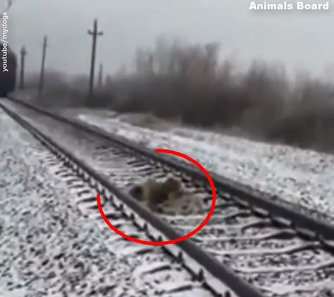 Canine Saved Life Of One other Canine - #Dog #life #Saved