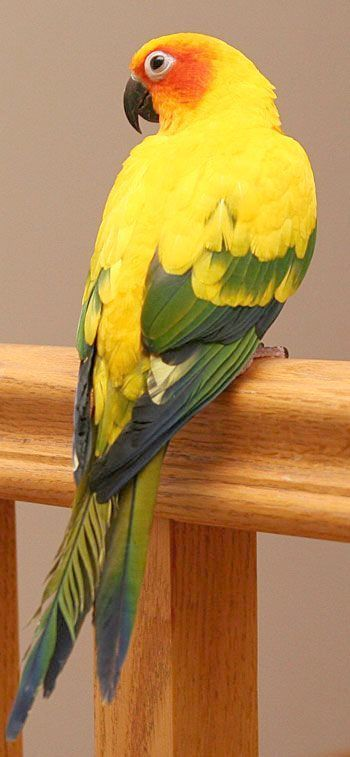 Pin On Pet Birds