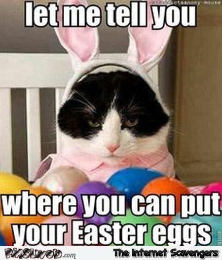20 Happy Easter Egg Hunting Memes Sayingimages Com Easter Humor Easter Cats Happy Easter Funny