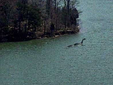 Lockness Monsters In Canada Or Europe Or Ireland Leave Them Alone Protected Animals Survived Their Family Of Dinosaur Loch Ness Monster Cryptozoology Mothman