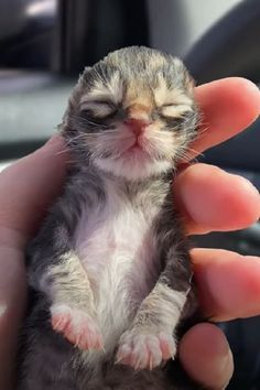 Cats Newborn Kitten Cats Cat Pet Cute Newborn Kittens Kitten