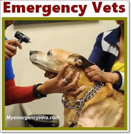 Top 10 Emergency Veterinarians Cost And Clinics Emergency Vet Emergency Vet Clinic Vets