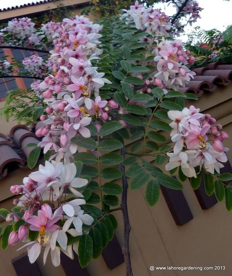 Rare flowers from warm climate. Exploring rare tropical climbers, fragrant plants, bulbs and kitchen gardening.