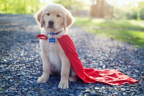 Image result for dog superheroes