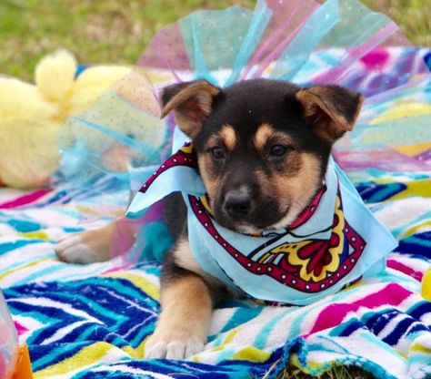 Adopt Haley On Pet Adoption Mixed Breed Adoption