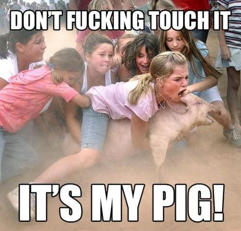 Saturday Night in Iowa In This Picture: Photo of girls fighting over a pigs head