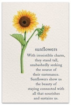 Pin By Julie Hochstetler On Quotes Smiles 4 You Flower Quotes Sunflower Quotes Spiritual Symbols