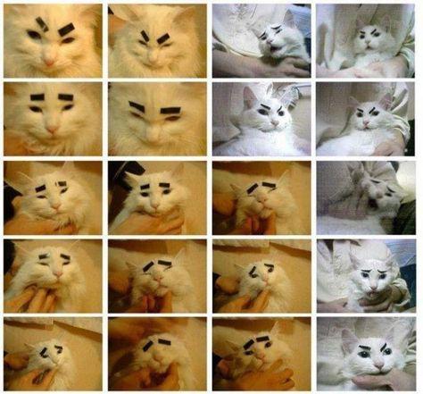 Here, kitty, kitty, kitty.