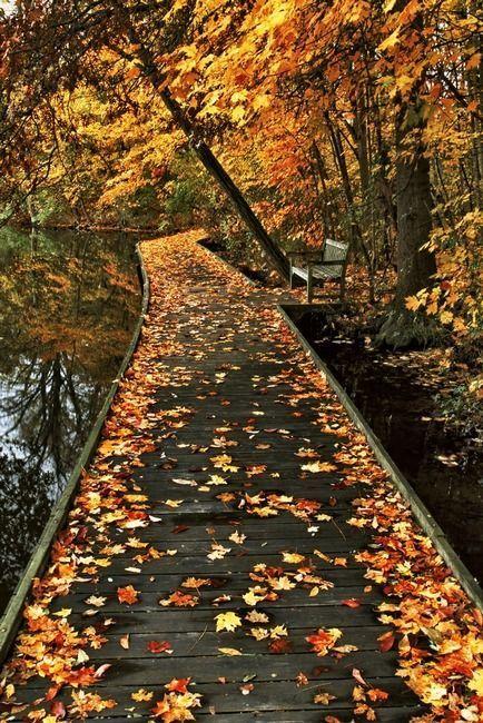 Retomo El Cauce Del Amor Perdido No Perturba El Estar Sino La Ausencia Julia Prilutzky Beautiful Fall Nature Photography Beautiful Nature