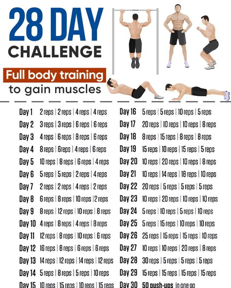 Full Body Training To Gain Muscles!