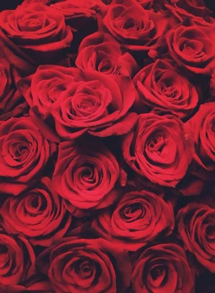 Wall paper rose burning 61 Ideas #wall