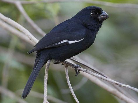 170 Canaries Finches Ideas Canary Canary Birds Birds