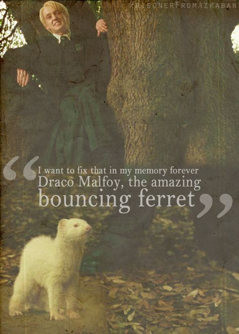 Through It All, Your Ferret ~ A Dramione Fanfiction (Complete) - Chapter 4 What My Life Has Become - Wattpad