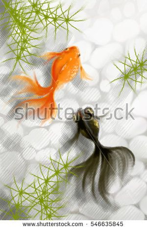 Realistic Digital Painting Gold Fish And Black Goldfish And Seaweed On A White Stone Background ภาพประกอบ