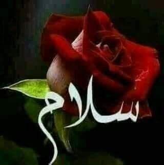 سأهديكم هذا المــسـاء هدية ورد من قلب زهرة ندية سأغزلها بخيوطـ الشمس الذهبية وأعطرها بندى الورد التي تفتحت هذا المــســاء و Flowers Islamic Quotes Rose