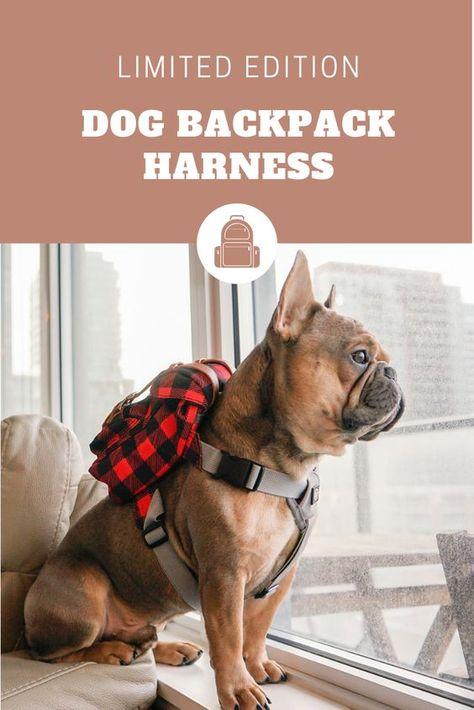 Cappotti per cani: l'inverno sta arrivando! Animali Pucciosi