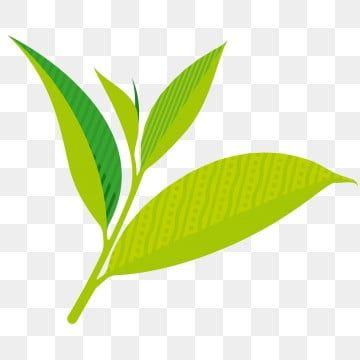 ว ฒนธรรมชาจ นใบชาฤด ใบไม ร วงส ขภาพ ใบไม ว ฒนธรรมชาจ น ชาภาพ Png และ เวกเตอร สำหร บการดาวน โหลดฟร Tea Culture Leaf Clipart Clip Art