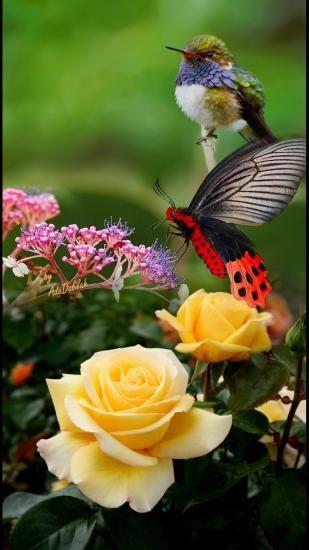 Https Www Facebook Com Alasdefantasia Photos A 2006632889449711 1978878435558490 Type 3 T Beautiful Butterfly Pictures Beautiful Birds Beautiful Butterflies