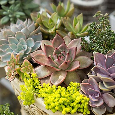 Garden Ideas Projects The Home Depot In 2020 Succulents Plants Planting Succulents
