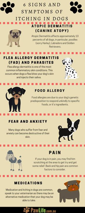 6 Signs And Symptoms Of Itching In Dogs Dog Skin Allergies Dog